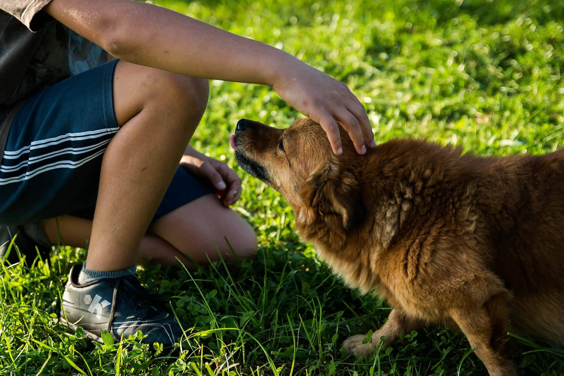 Martin Bregna Entrenador Canino