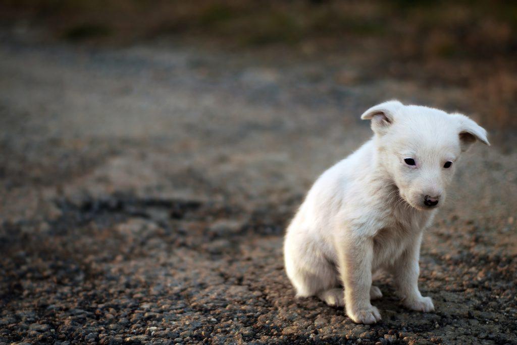 cachorro en adopción