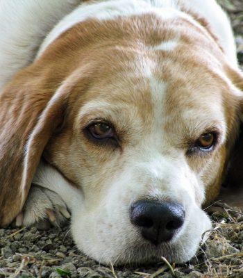Geriatrico Canino Buenos Aires