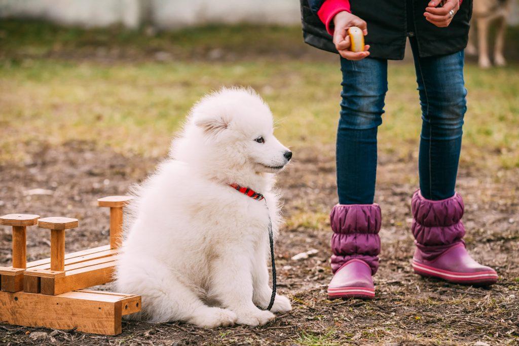 escuela de perros