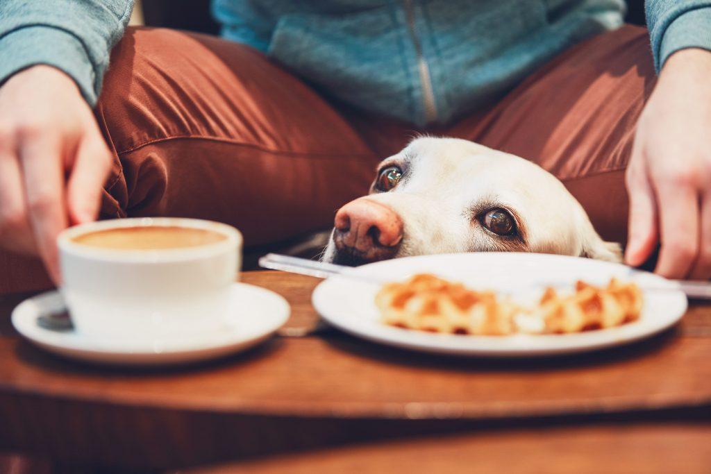 como alimentar a tu perro