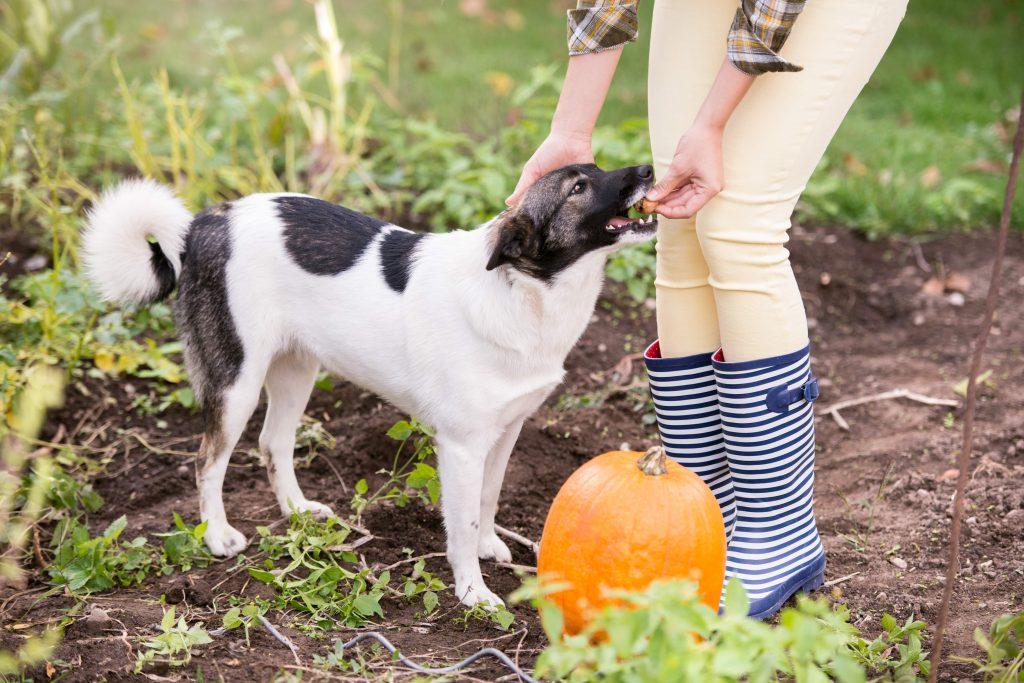 los perros y el jardín