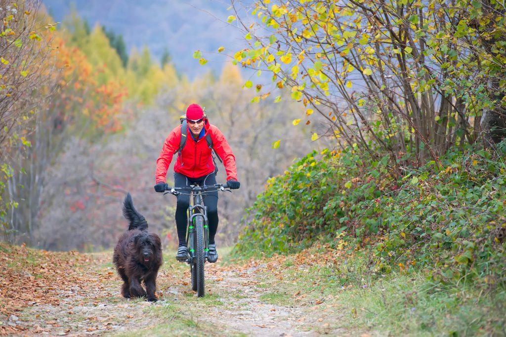 en bici con tu perro